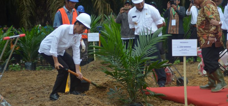 Image result for jokowi replanting riau